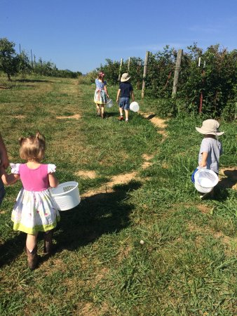 Greeneville, TN: Berry picking playdate! The kids love it!
