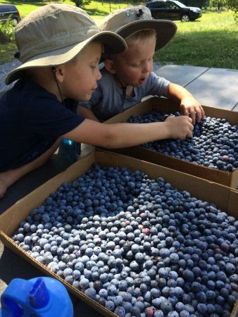 Greeneville, TN: The boys enjoying their berries.