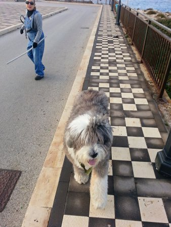 Augusta, Italy: Nice walkway. Me and my Cani de pastore (dog of the pasture) aka WILLIS!