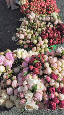 Invercargill, Nieuw-Zeeland: Peony Season - One of our favourite times of the year.