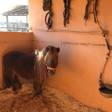 Montornès del Vallès, España: Granja de animales de Can Sala
