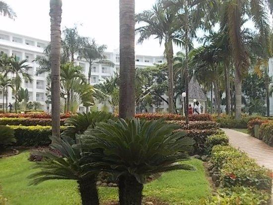 Hotel Riu Ocho Rios: Standard area