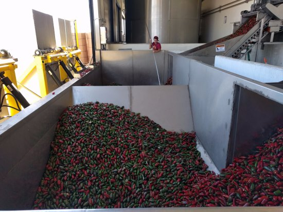 Irwindale, CA: Peppers going to conveyor