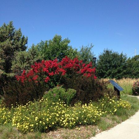 Hesston, KS: Spring in full bloom