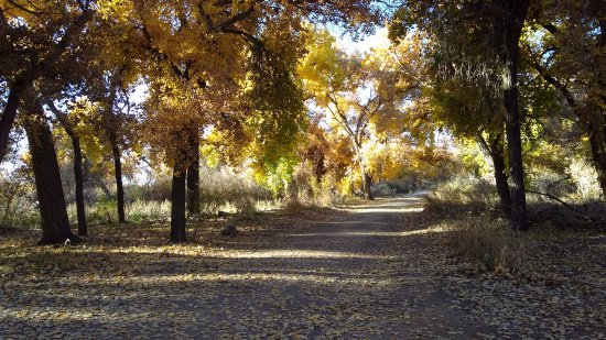 Rio Rancho, New Mexiko: Fall colors from mid November