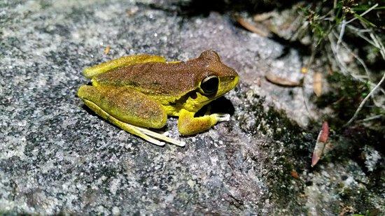 Kiama, Australia: Frog by a stream