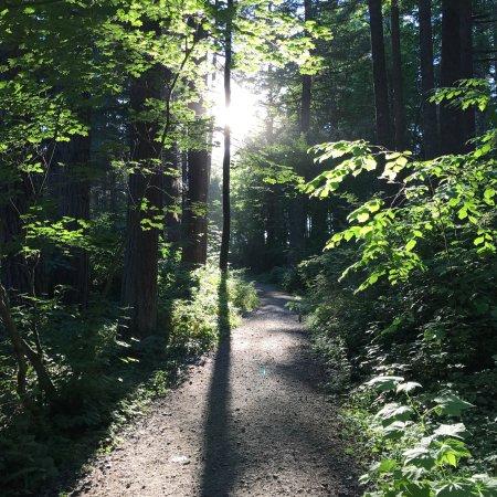 Lake Wilderness Arboretum: photo4.jpg