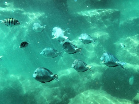 "Edventure Tours: A school of ""Dori""-fish at the lagoon."