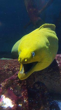 Oregon Coast Aquarium: morey eel