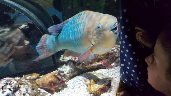 Oregon Coast Aquarium: If you wear a polka dotted sweatshirt to this aquarium, the fish think you are food.