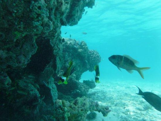 Maafushi Island: Snorkeling Trip with Catamaran