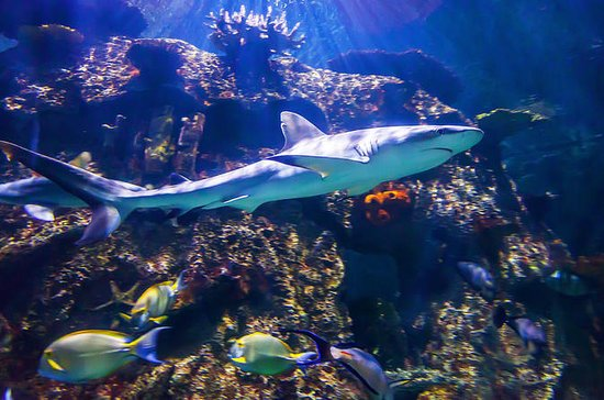Shark Reef Aquarium at Mandalay Bay...