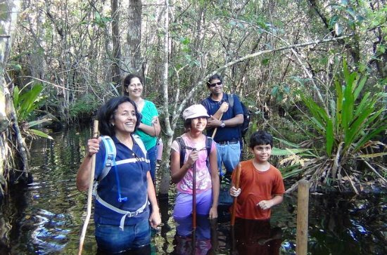 Small-Group Tour: Florida Everglades
