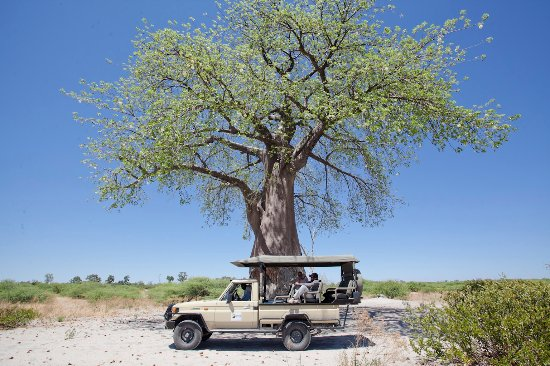 Maun, Botswana : Odirile Safari - Botswana - Moremi