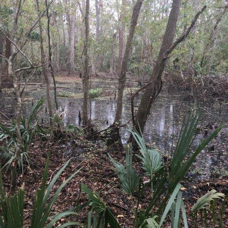 De Leon Springs, FL: photo1.jpg