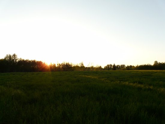 Spruce Grove, Canada: Sunset / field