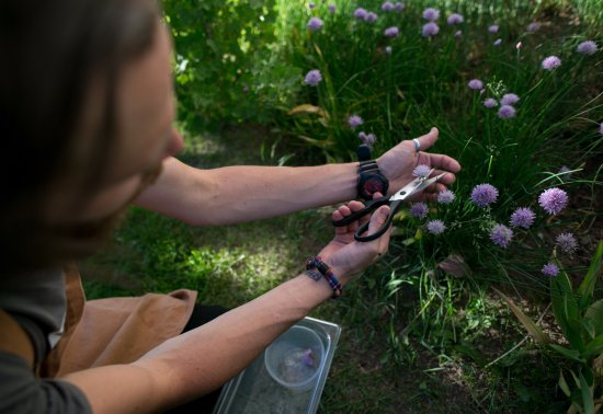 Avon, CO: we harvest fresh ingredients from our garden during the summer