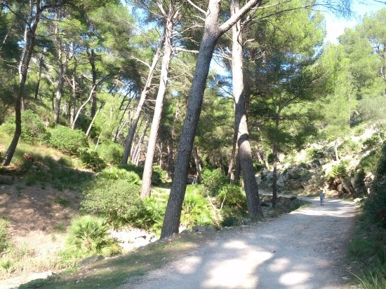 Playa Coll Baix: Когда-то это был асфальт..