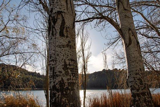 Castile-La Mancha, Spain: el sol juega al escondite entre árboles