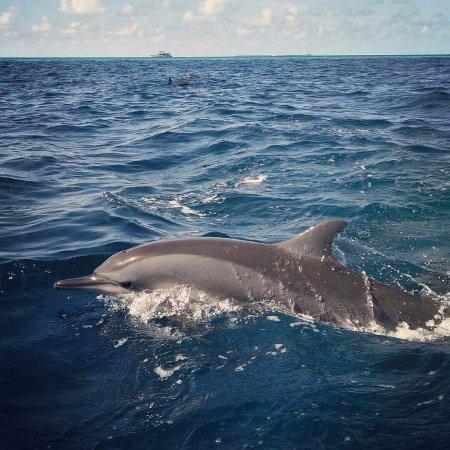 Thulusdhoo Island: Don't miss the chance to see these beautiful creatures in Thulusdhoo!