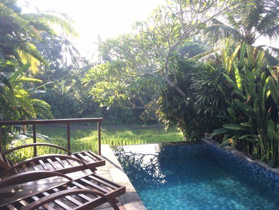 Ubud Green: Private villa pool with view of rice farm