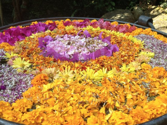Dhulikhel, Nepal: Flowers everywhere