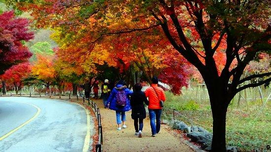 Jeonju, South Korea: Naejangsan