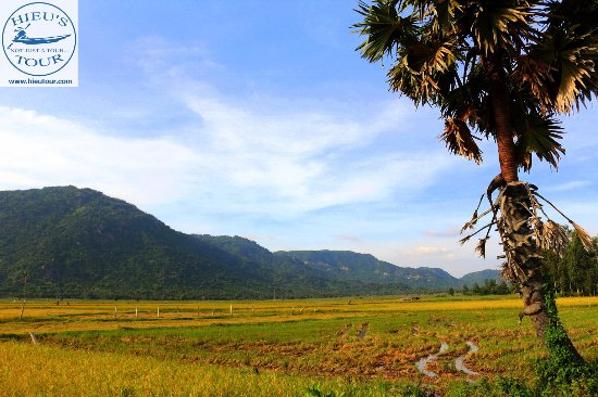 Cần Thơ, Việt Nam: Rice fields in the Mekong Delta region Web: www.hieutour Email: contact@hieutour.com Tel: +83292