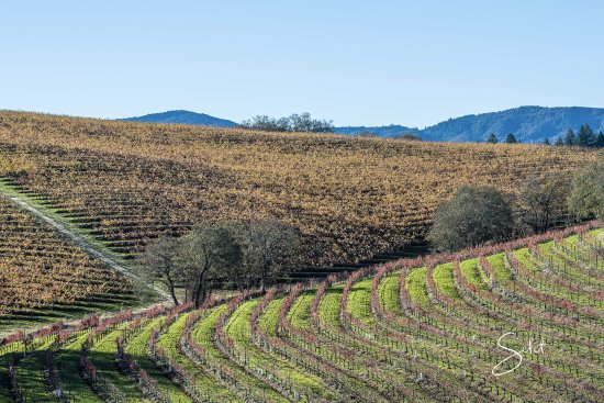 Squire Livery Tours: The Napa Valley