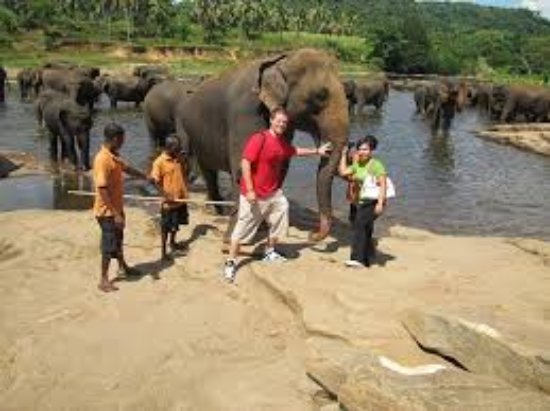 Panadura, Sri Lanka: We are at Pinnawela Elephant oparang