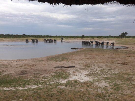 Hwange National Park, Zimbabwe: Manada de elefantes I