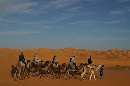 Hassilabied, Morocco: Camel trekking in Sahara Desert Merzouga