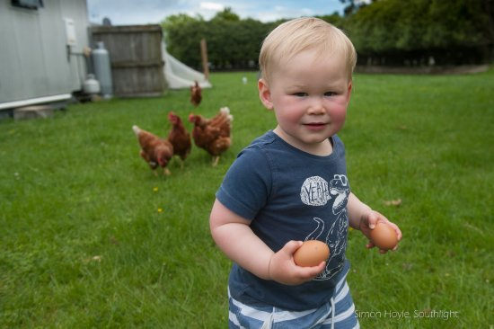 Havelock North, New Zealand: Fresh eggs for breakfast