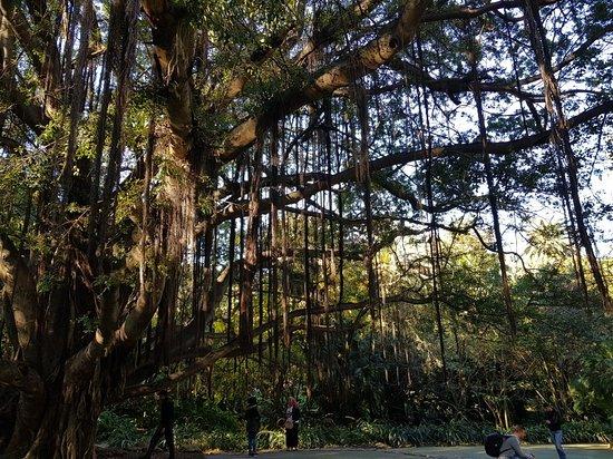 Le jardin d 39 essai du hamma photo de le jardin d 39 essai du for Villas de jardin seychelles tripadvisor