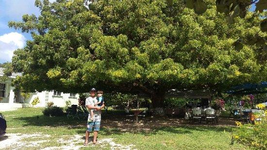 Gun Bay, Grand Cayman: IMAG0779_large.jpg