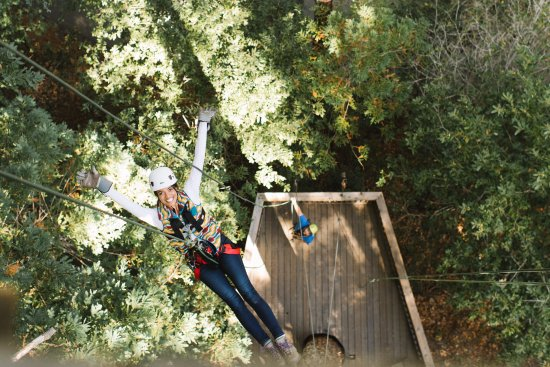 Occidental, CA: End your thrilling and educational experience with a 60 ft rappel from a redwood!
