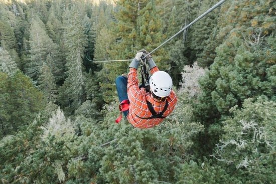 Occidental, Californië: Zip above and through the redwood forest canopy on this world class tour.