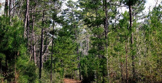Kountze, TX: Big Thicket National Preserve, East Texas.