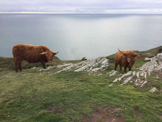 Salcombe, UK: Coos just past Bolt Head