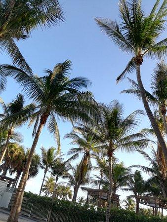 South Seas Hotel: IMG_20171206_161947_large.jpg