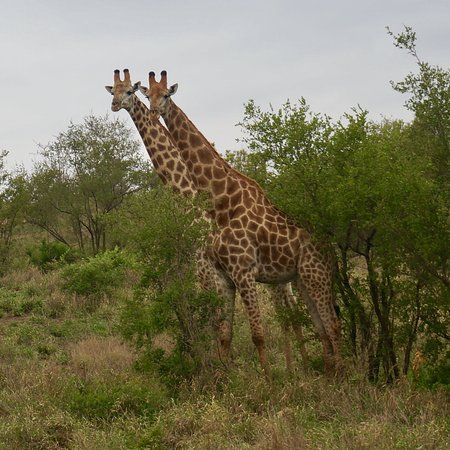 Phalaborwa, جنوب أفريقيا: photo2.jpg