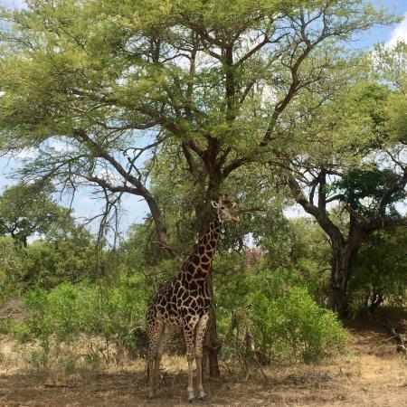 Палаборва, Южная Африка: photo3.jpg