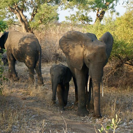 Phalaborwa, جنوب أفريقيا: photo4.jpg