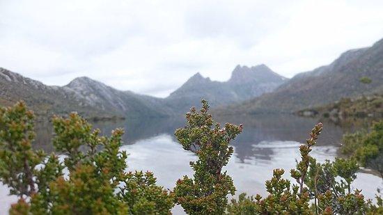 Cradle Mountain-Lake St. Clair National Park, Australia: DSC_5806_large.jpg
