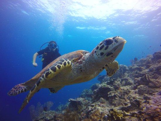 Lovina Beach, Indonesië: Excellente qualité de la GoPro sous l'eau