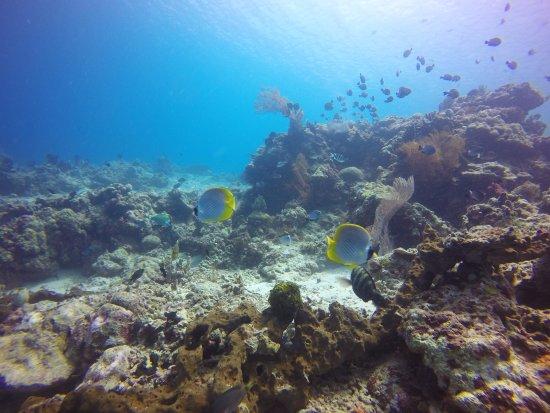Lovina Beach, Indonesia: Excellente qualité de la GoPro sous l'eau