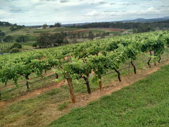 Petersons Wines