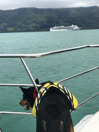 Akaroa, Νέα Ζηλανδία: photo1.jpg