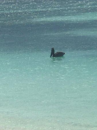 Praia Crasky : Pelicano desfrutando da pesca