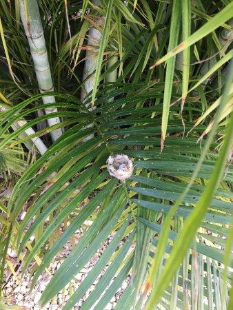 Bridanda Apartments Bonaire: Hummingbird nest on the grounds!
